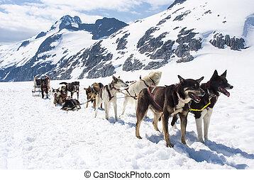 -, alaska, el sledding, perro