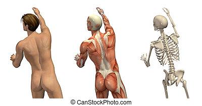 -, anatomisch, drehung, overlays, erreichen