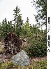 -, arbre, déraciné, dommages orage