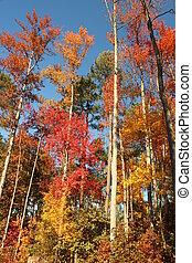 -, arbres, automne, couleurs, 2, grand
