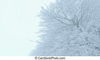-, arbres hiver, nature