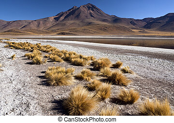 -, atacama, miscanti, chile, laguna, wüste