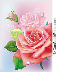 -, augurio, illustrazione, rose, vettore, scheda