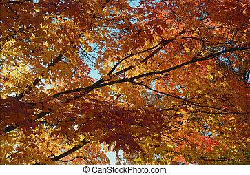 -, automne, perspective, feuillage, baldaquin, érable