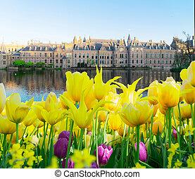 -, binnenhof, 議会, オランダ, オランダ語