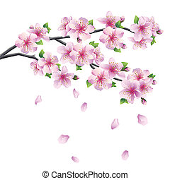 -, blühen, baum, japanisches , sakura, zweig, kirschen