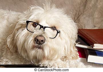 -books-reading, 犬, ガラス