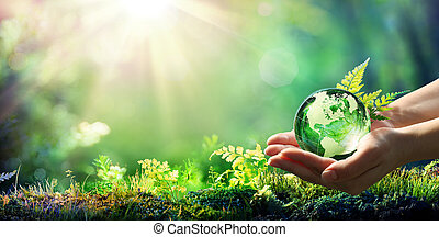 -, bosque, globo, sostener el cristal, ambiente, manos, concepto, verde