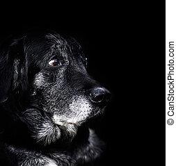 -, cachorro velho, animal