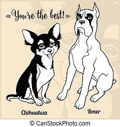 -, chihuahua, cane, set, pugile, allevare, cartone animato, immagini
