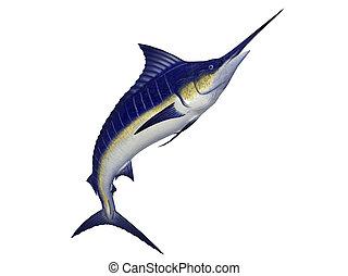 sailfish illustrations and clip art 2 175 sailfish royalty free rh canstockphoto com Sailfish Anatomy sailfish clipart black and white