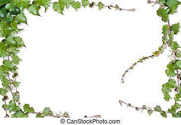 vine illustrations and stock art 48 305 vine illustration and rh canstockphoto com clip art vines border clip art vines free