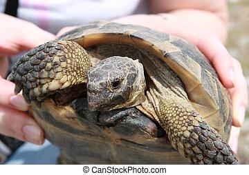 - , closeup , χελώνα , handheld