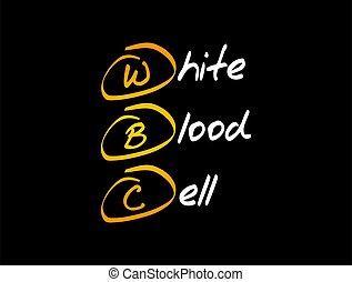 -, conceito, médico, sangue, branca, wbc, célula, acrônimo