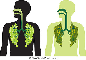 -, dech, płaty, płuco, fres, zielony
