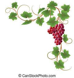 grapevine clipart and stock illustrations 3 710 grapevine vector rh canstockphoto com grape vine design clipart grape vine clip art free