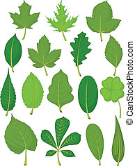 -, feuilles, ensemble, vert
