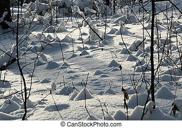 -, fundo, neve, luz solar