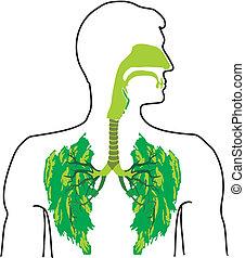 -, grön, öppna, lunga, luft
