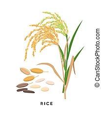 -, granos, fondo., vector, cereal, arroz, diseño, aislado, ...