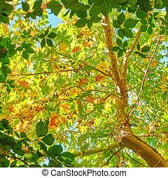 -, hojas, verde, leafage, plano de fondo, luz del sol