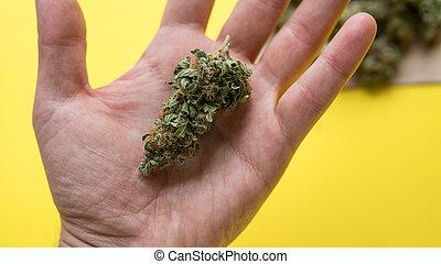 -, indica, cannabis, impaciente, tipos, jardineiros, flores, ruderalis, sativa, marijuana