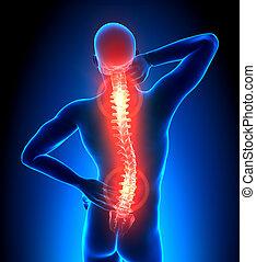 -, mannelijke , pijn, ruggengraat, schaden