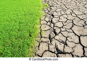 -, milieu, groene, droog, aarde, fris, gras