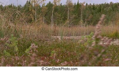 -, mouvement, marais, appareil photo, par, forêt, hd