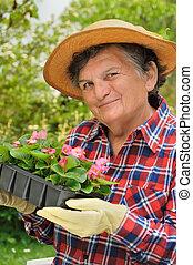 -, mulher sênior, jardinagem