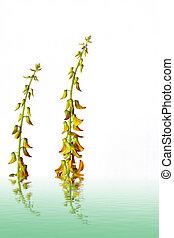-, názor, detail, květ, yelllow