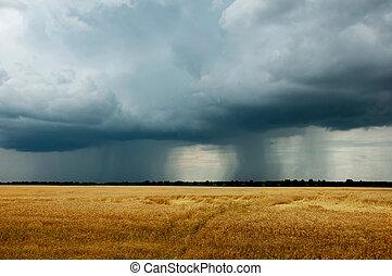 -, orage, paysage, champ, blé