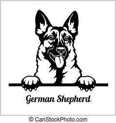 -, pastor, perros, echar una ojeada, alemán, aislado, cara ...