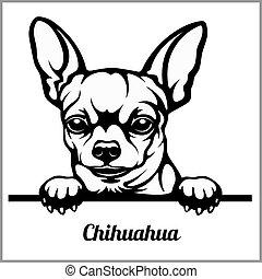 -, perros, echar una ojeada, aislado, cara blanca, chihuahua...