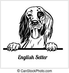 -, perros, inglés, echar una ojeada, aislado, setter, cara ...