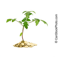 -, plante, begreb, tilvækst, firma