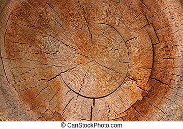 -, seção, árvore, crucifixos, crescimento, anel,  circular