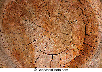 -, sezione, albero, croce, anello crescita, circolare