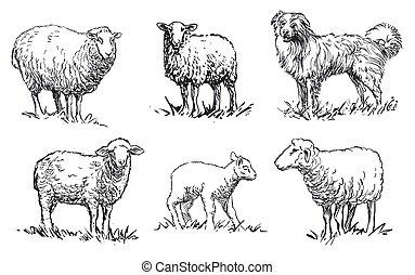 -, sheep, dát, živočichy, ovčák, neposkvrněný, farma, plán, čerň, osvětlení