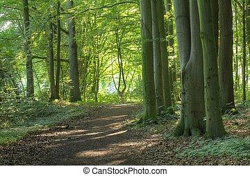 SchoenebeckWald16jHB032_3_4_5_tonemapped.jpg - Waldweg,...
