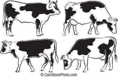 -, szkice, krowa, byk