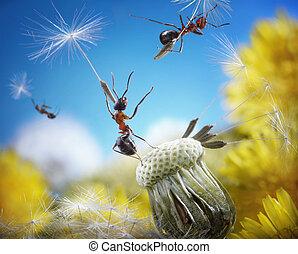 -, tales, voando, dandelion, formigas, formiga, sementes, astucioso, guarda-chuvas