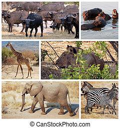 -, tansania, afrikas, safari