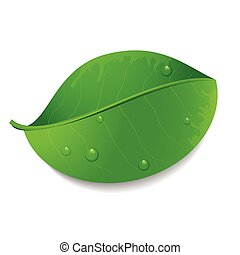 -, vecteur, feuille verte