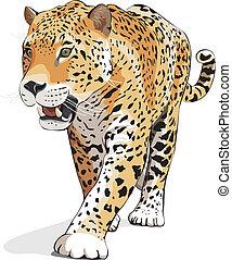 -, vector, jaguar, aislado, blanco