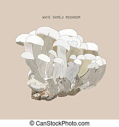 -, vector, mushrooms., bosquejo, shimeji, ostra, rey, ...