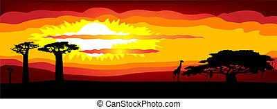 -, vektor, solnedgång, afrika