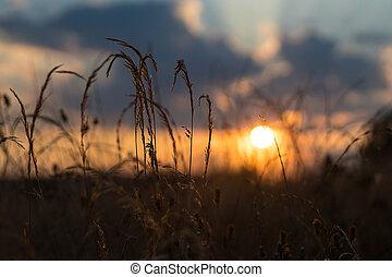 -, venkov, západ slunce, večer, léto, velký drn
