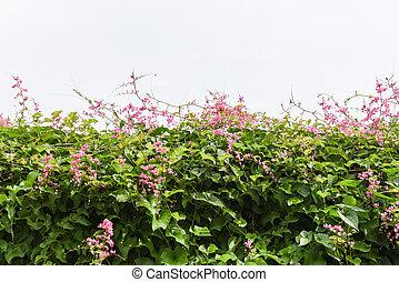 -, verde, tetto, vite, rosa, foglie, bianco, edera, fiore, crescere, pianta, fondo