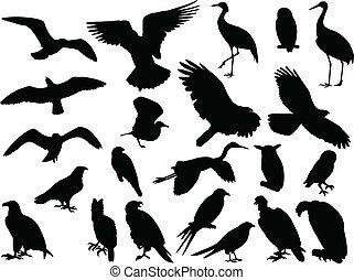 -, vetorial, pássaros, cobrança
